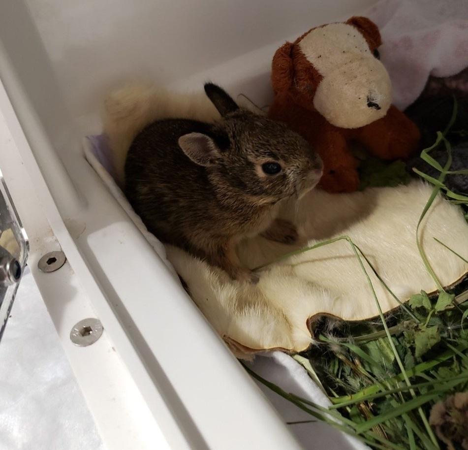 bunny in incubator